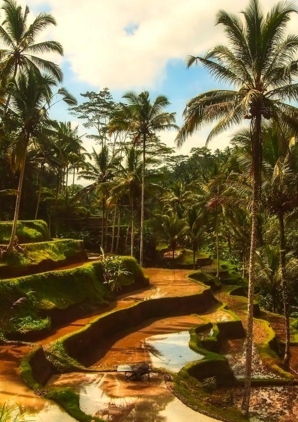 The Bali Journey