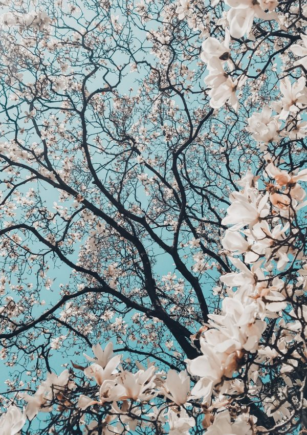 20 Things I love about spring