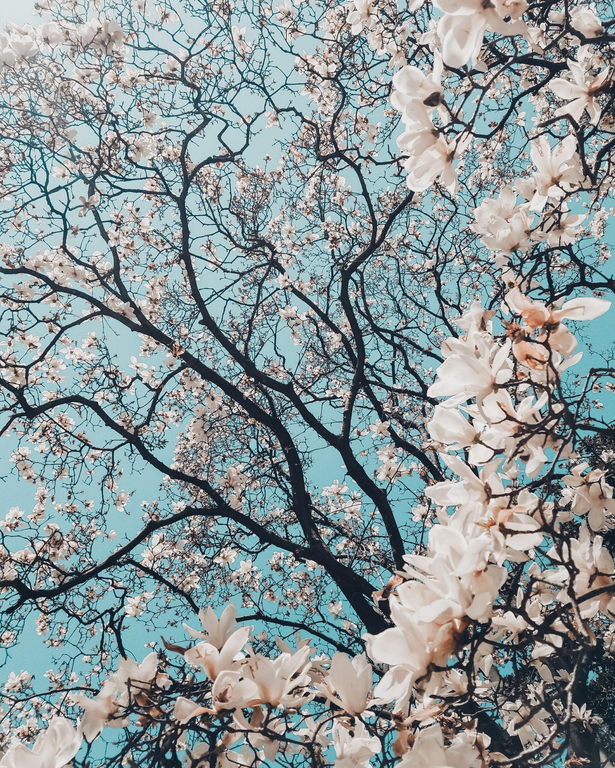spring, season, life, love