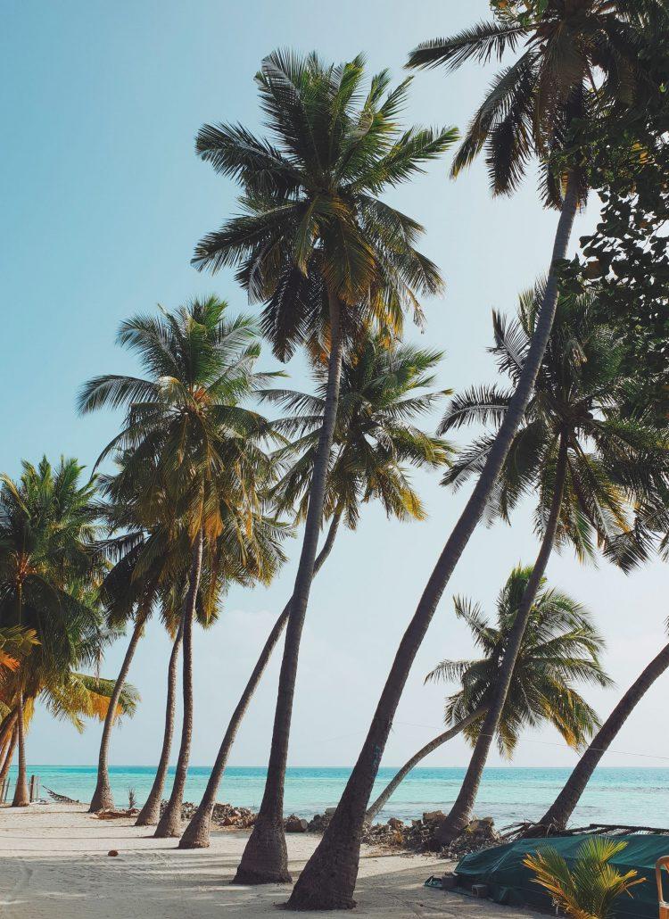 Summer, palmtrees, plans, sun, life, happy