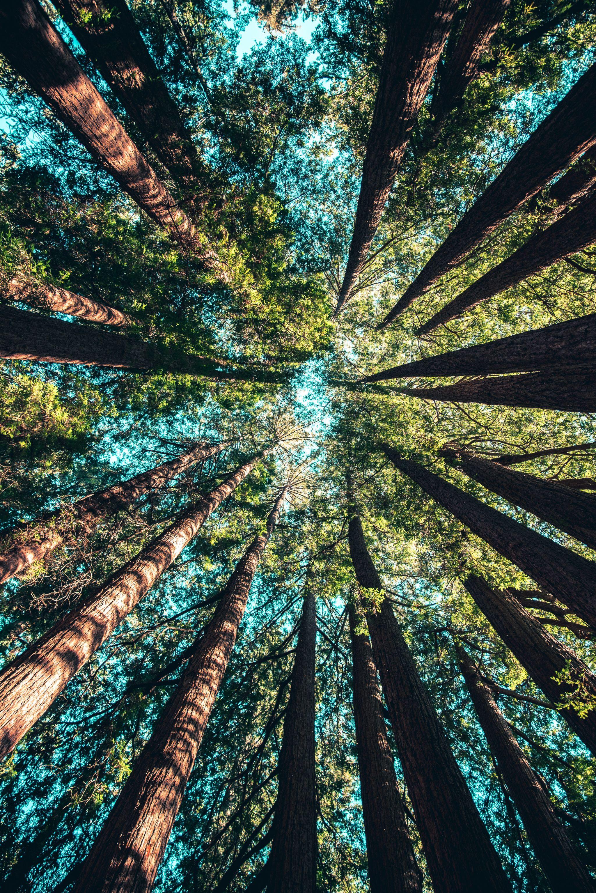 summer, sun, life, happy, trees, fall, october