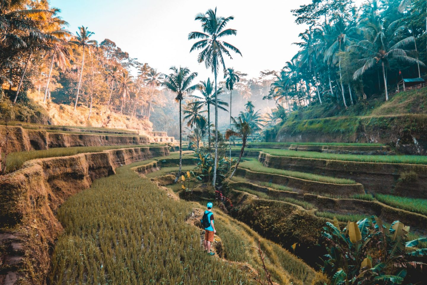 rice fields, palmtrees, travel, traveling, wanderlust, travel blogger, inspire, inspiration