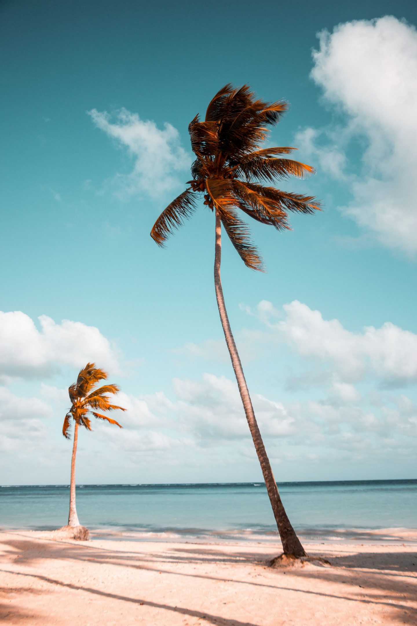 palmtrees, travel, traveling, perfect trip, trip, inspire, inspiration, guide, travel guide