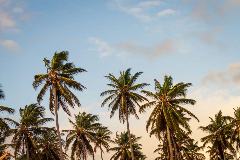 palmtrees, trip, travel, wanderlust, inspire