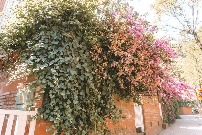pink, flowers, street, barcelona