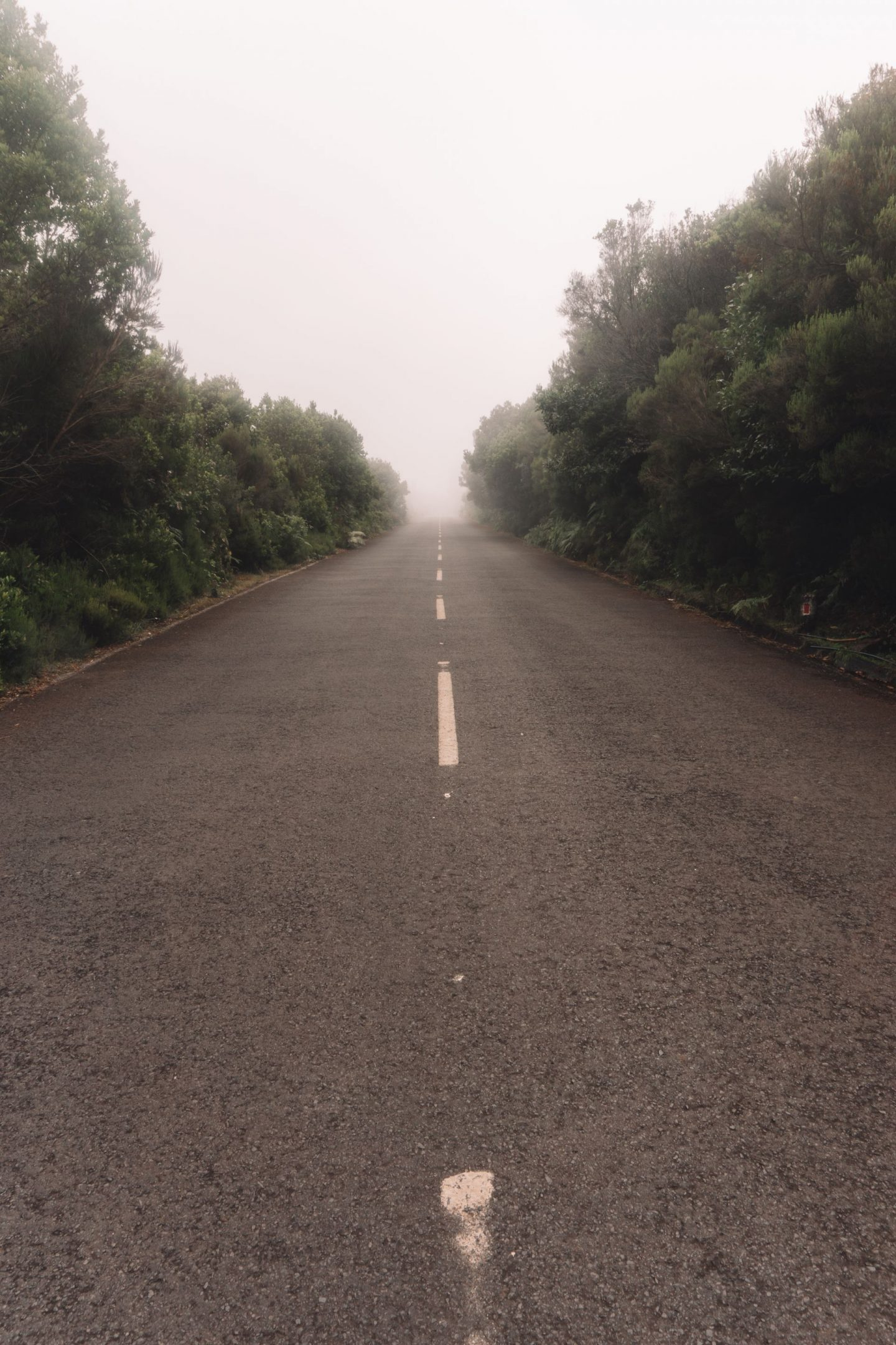 road in the forest of madeira, fog, rain forest