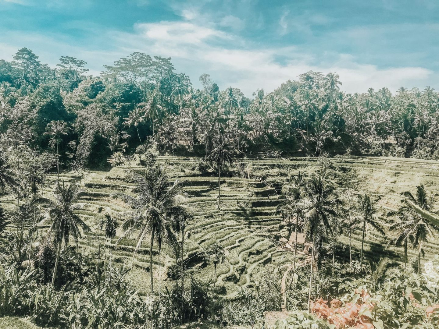 rice terraces, ubud in bali, the bali guide, three days in ubud, tegalalang rice terraces