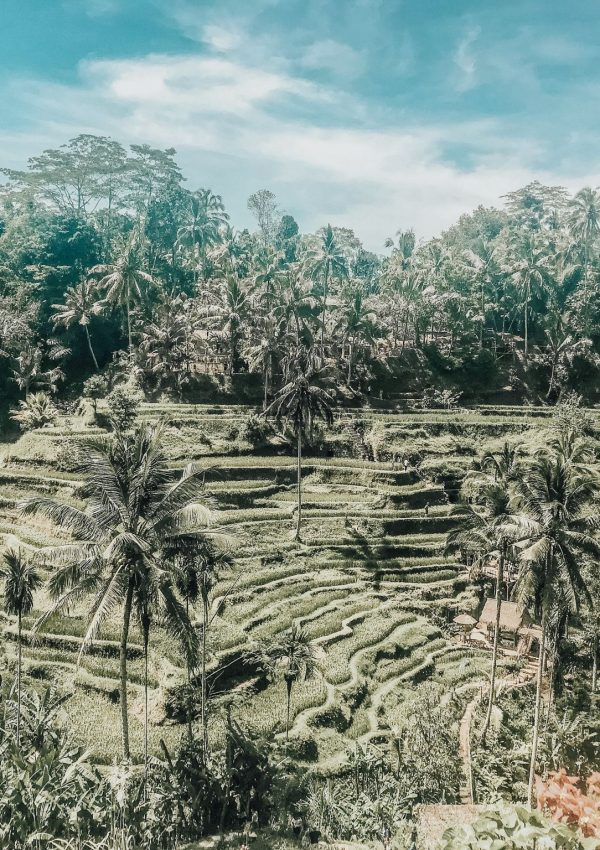 rice terraces in ubud, how to spend 3 days in ubud, travel inspiration