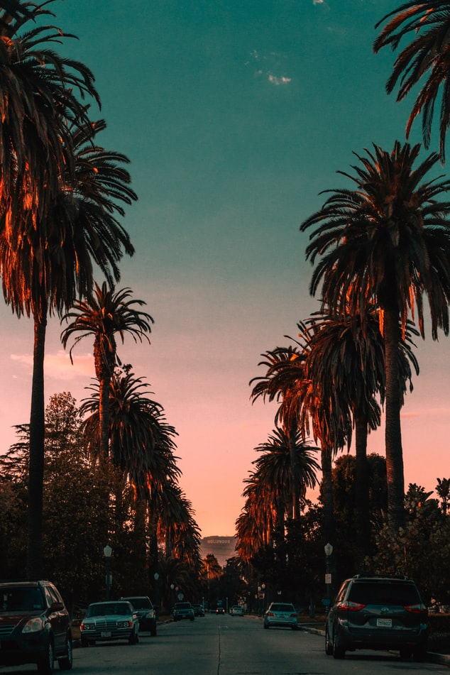 palmtrees with sunset, 20 trips to take in your twenties, where to go