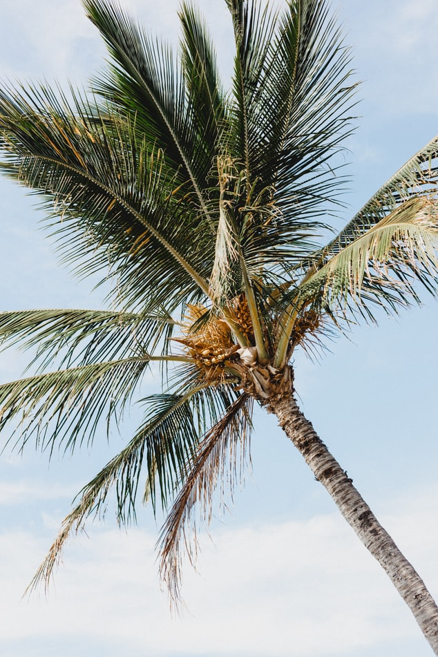 coconuts, island life, bali in indonesia, the perfect instagram captions, palmtrees, instagram puns, bali quotes, the best travel quotes, travel inspiration
