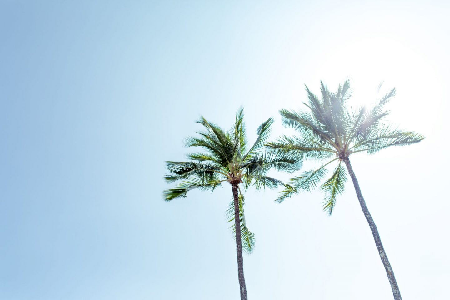 palmtrees, blue sky