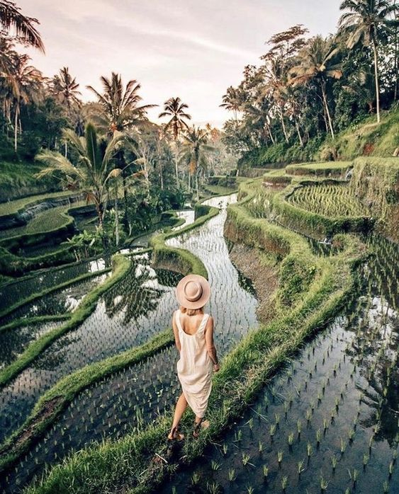 bali travel photography, rice fields in the early morning, indonesia travel inspiration