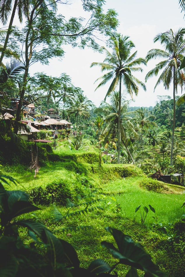 the green nature in ubud, bali travel photography, indonesia, travel inspiration