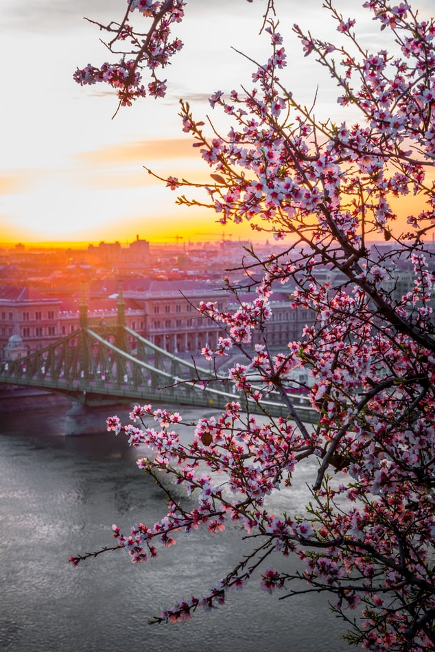 flowers with budapest in the background, budget travel in europe