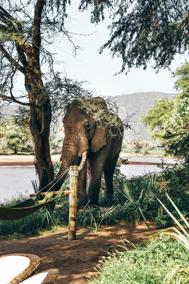 photography of an elephant approaching the photographer
