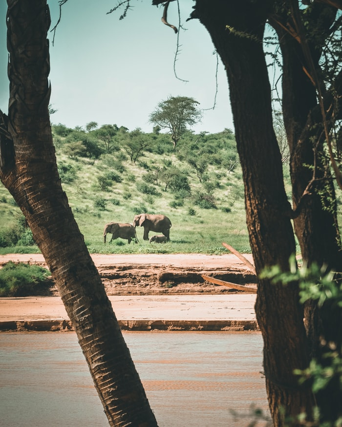 elephants in the distance, elephants in the wild