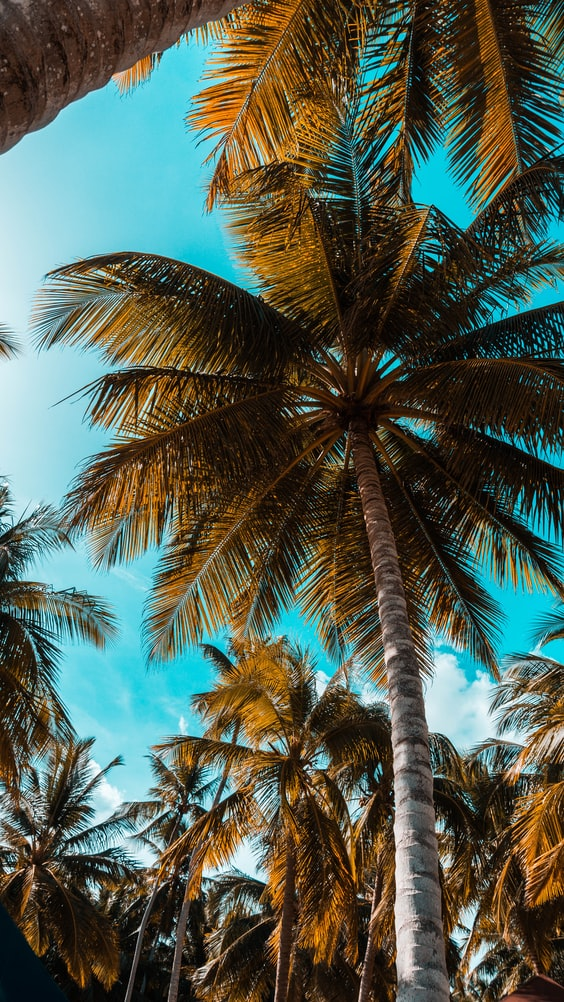palmtrees with a blue sky on an island, travel quotes and island quotes