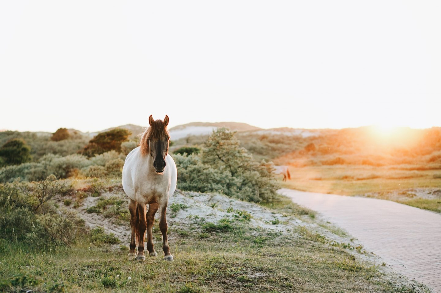 a horse in the countryside of the netherlands, park with sunset, dutch culture