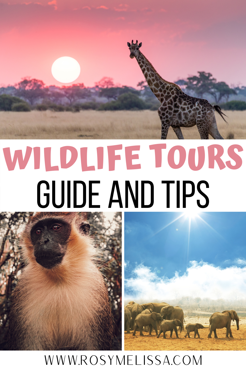 animal rights guidelines for wildlife tourism, animal tourism, animal tourism, animal excursions