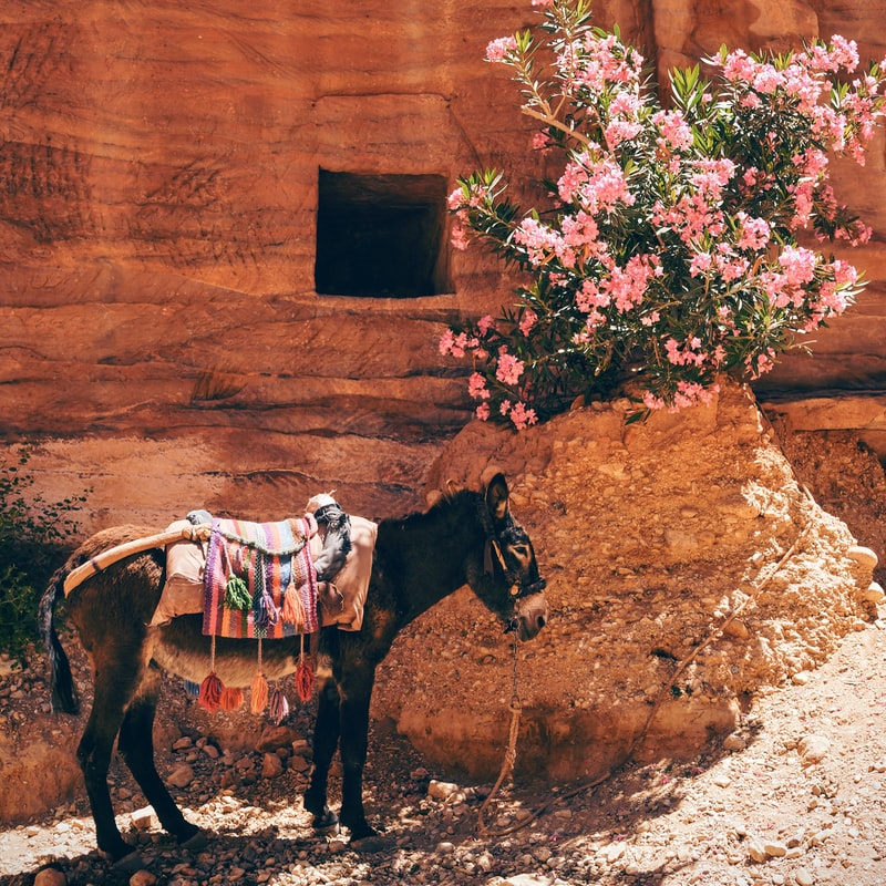 a donkey next to a red brown building with flowers, travel inspiration