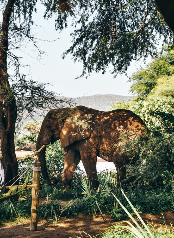 an elephant in nature, nature photography, wildlife, photography