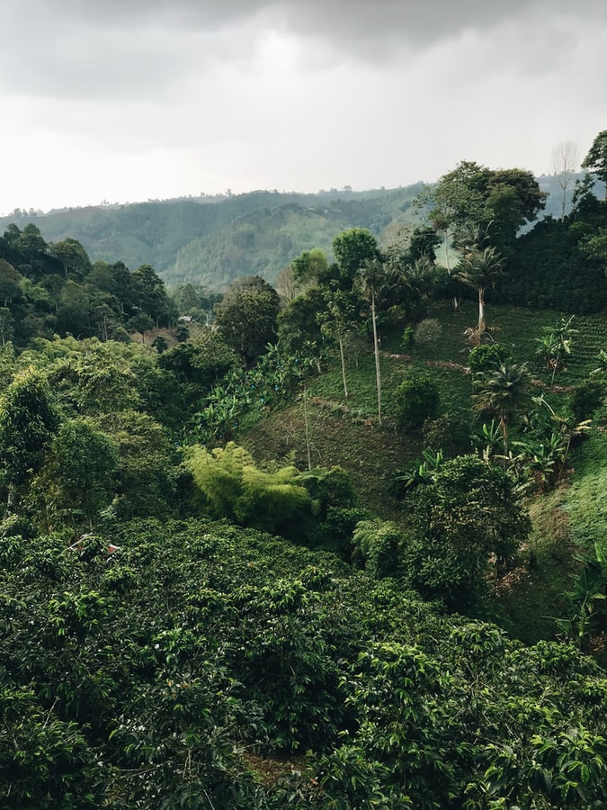 travel in colombia, natural beauty, greenery, rainforest