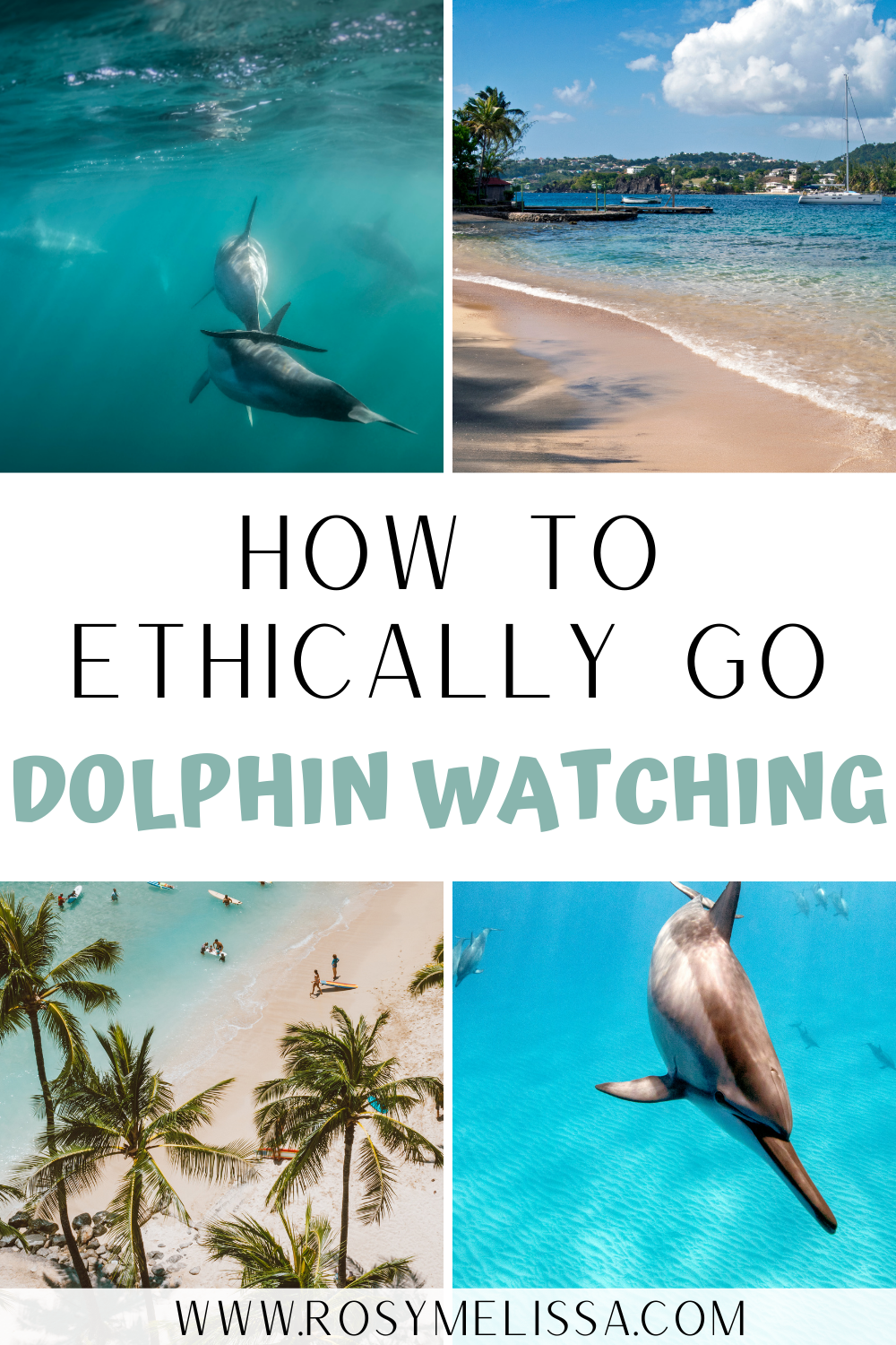 how to ethically go dolphin watching, tips to responsible spot dolphins