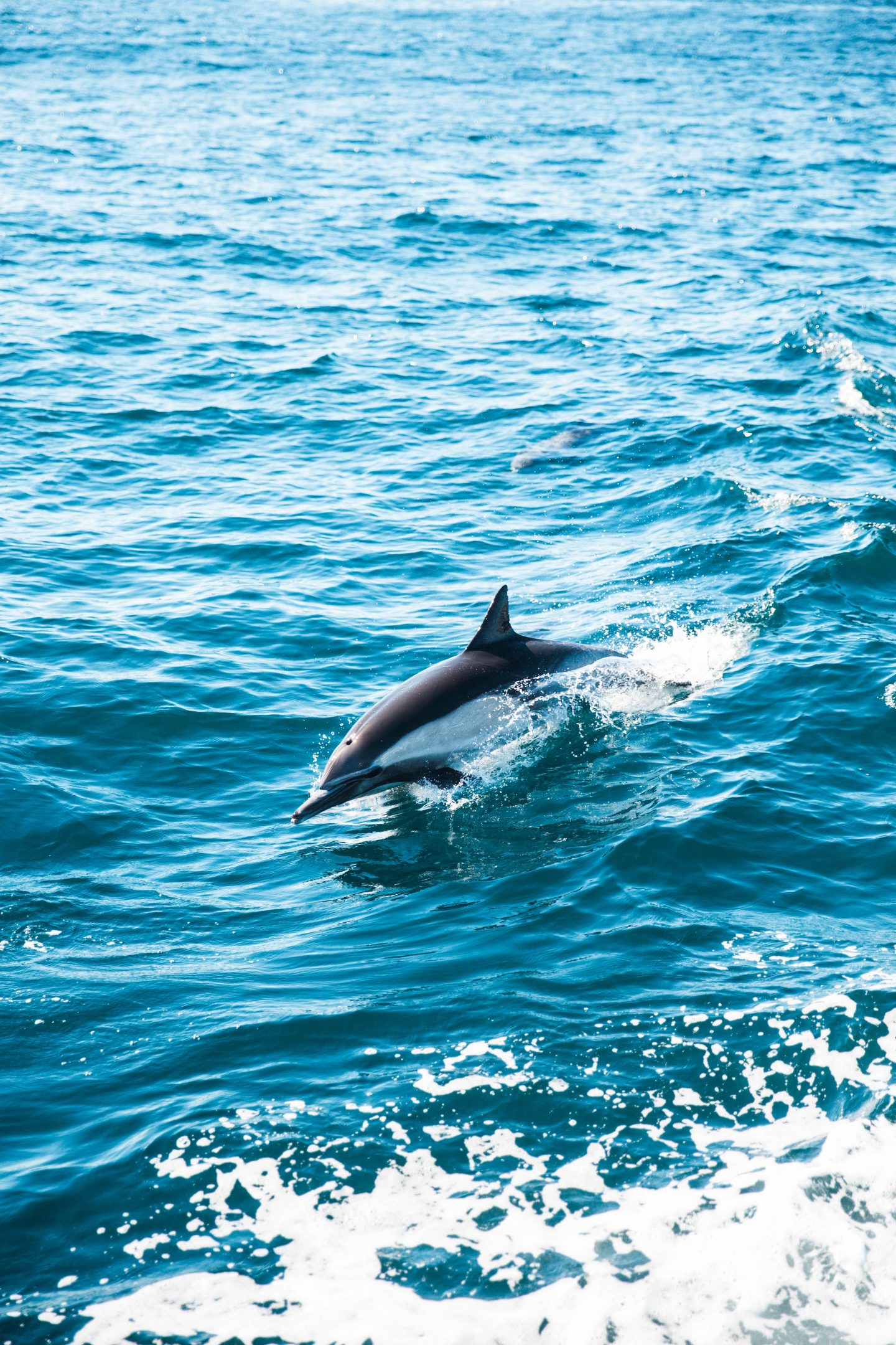 a wild dolphin jumping out of the water in the ocean, bright colored ocean