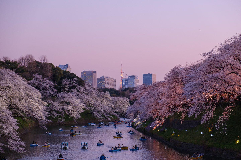 springtime in tokyo, cherry blossoms in japan, spring in japan