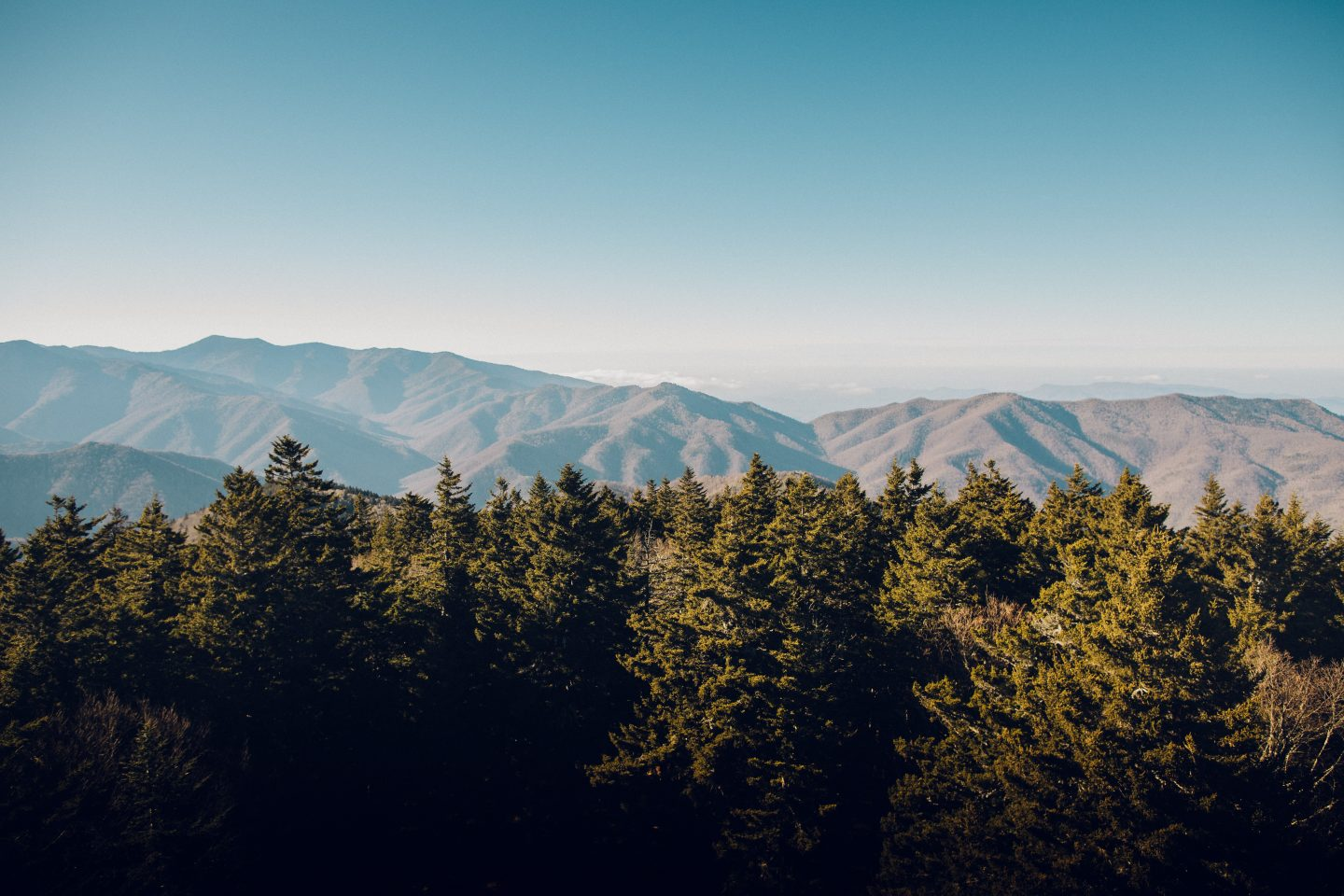 trees, mountains in background, nature shot
