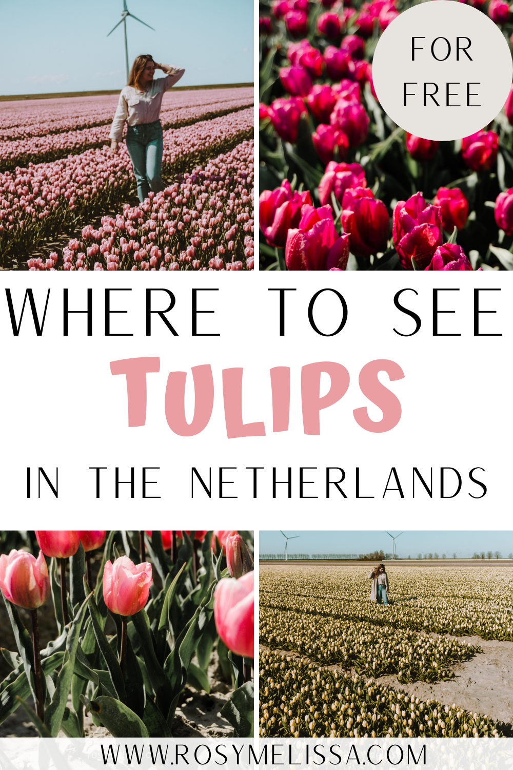 the best secret place to find tulip fields in the netherlands for free